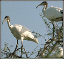 Migrated Birds in Bharatpur