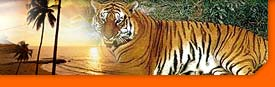 india wildlife safari tours