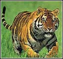 Indian Wildlife Tours